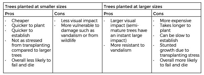 Initial tree planting sizes