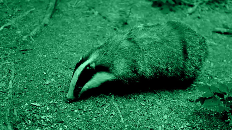video-badger