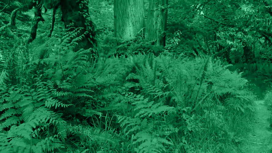 video-forest